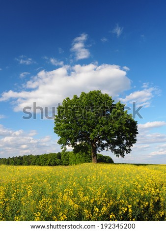 Single tree, rapeseed field and sky vertical - stock photo