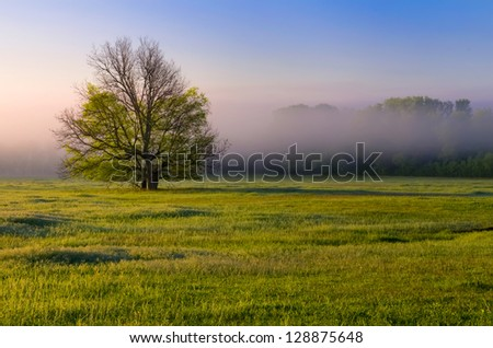 Single tree sitting in a green pasture with a foggy dawn background