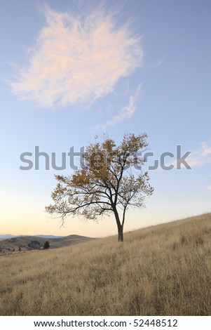 Single tree stands on a grassy hillside in the countryside. Vertical shot.