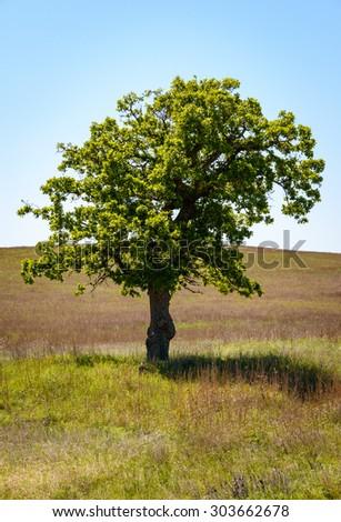 Single Tree, Wichita Mountains National Wildlife Refuge - stock photo