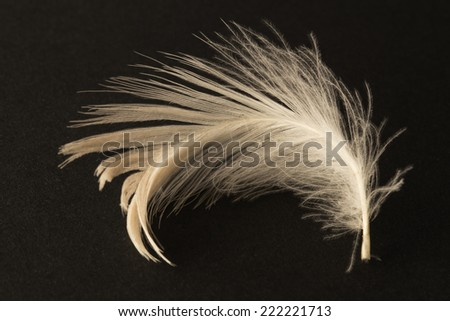 Single white feather on a black background