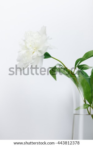 Single white peony in glass vase over grey simple background. low aperture shot, selective focus on petals - stock photo