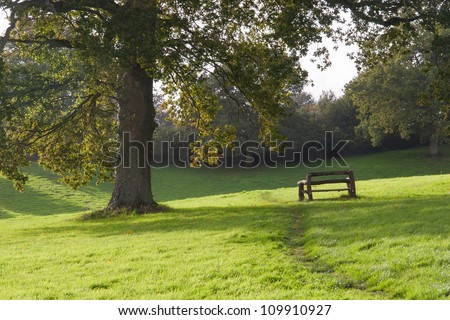 Single wooden bench under tree along park path