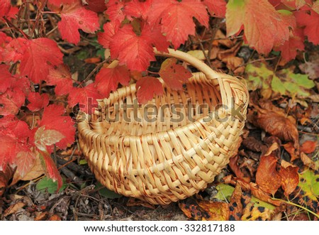 single wooden wicker basket stands under multi-colored maple leaves in the forest to collect mushrooms, berries and fruit in autumn - stock photo