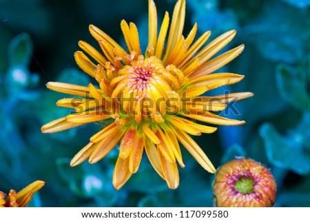 Single Yellow Flower - stock photo