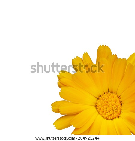 Single yellow flower isolated over white