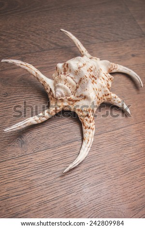 sink shell figure sea marine ocean from the bottom wooden background - stock photo