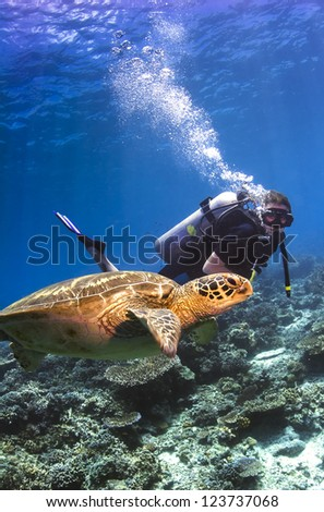SIPADAN ISLAND, MALAYSIA - OCTOBER 5: Un-indentified scuba diver watching swimming Green Seaturtle underwater near Sipadan on October 5, 2007. Sipadan is renowned for it's large population of Turtles.