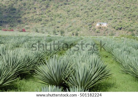 Sisal Stock Images Royalty Free Images Amp Vectors
