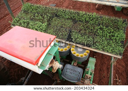 sistem to plantation of stevia to industrial use - stock photo