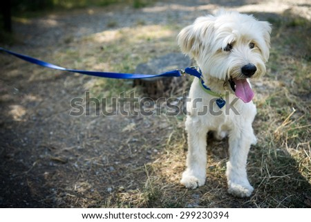 Sitted dog with leash - stock photo