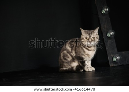 Sitting adorable gray cat on black background - stock photo