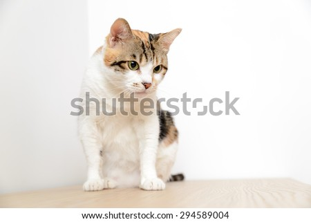 Sitting cat - stock photo