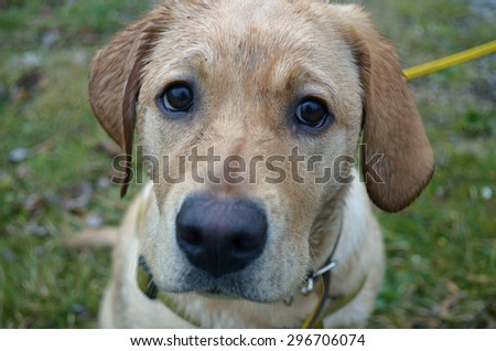 Sad Dog Stock Images, Royalty-Free Images & Vectors ...