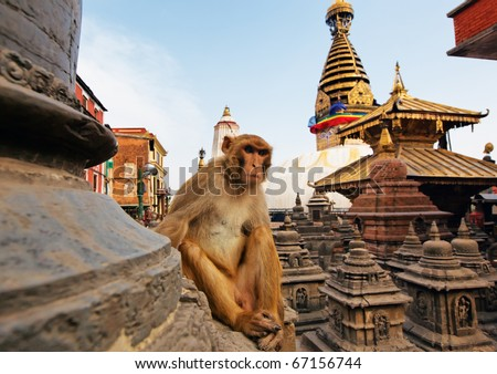 Sitting monkey on swayambhunath stupa in Kathmandu, Nepal - stock photo