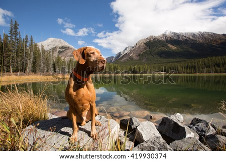 sitting vizsla outdoors by a mountain lake - stock photo