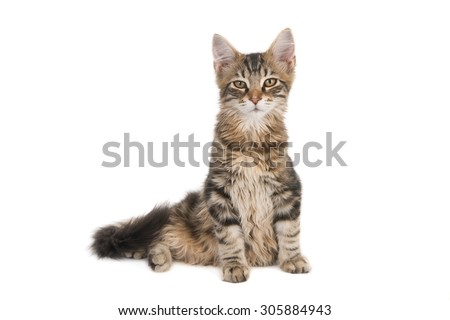 Sitting young striped cat looking into camera, isolated on white