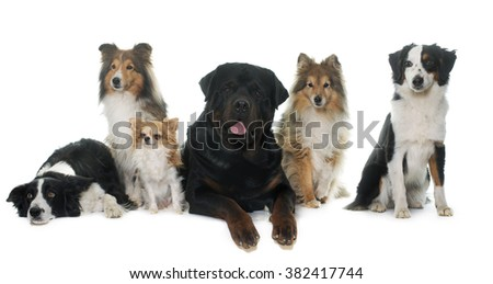 six beautiful dogs in front of white background