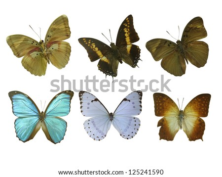 six butterfly white - stock photo
