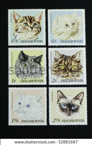 Six cats on postage stamp Hungarian cat series stamps on a black background. - stock photo