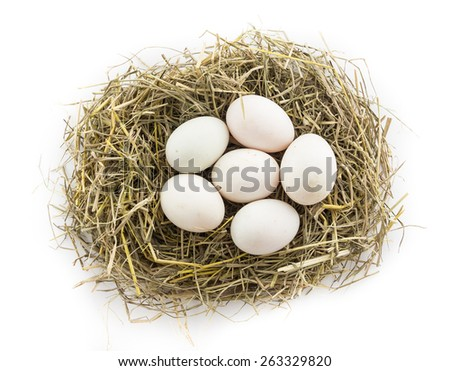 six duck egg in nest