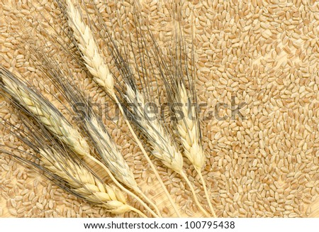 Six heads of bearded wheat on scattered wheat kernels on a wooden table top - stock photo