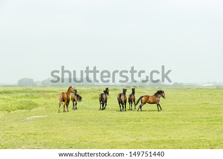 Six horses in a green meadow - stock photo