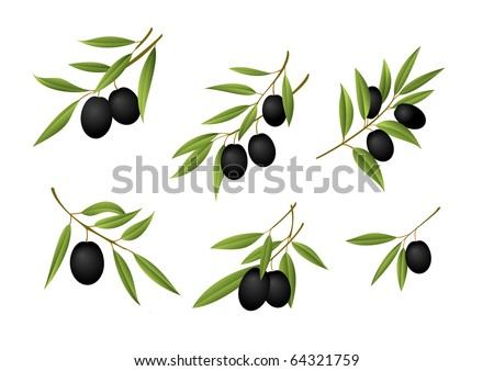 Six olive branches - stock photo