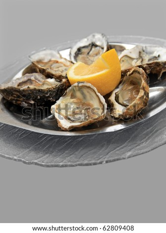 Six oysters on grey - stock photo