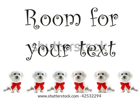 six Pure breed Bichon Frises wear red bows with room for your text isolated on white , text is easily replaced with your text - stock photo