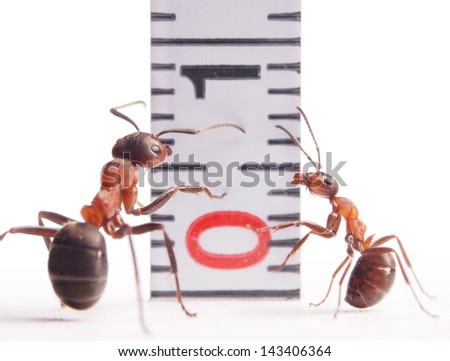 size matters, ants formica rufa and centimeter - stock photo