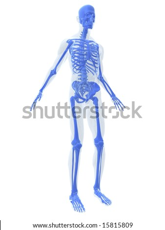 skeletal system - stock photo