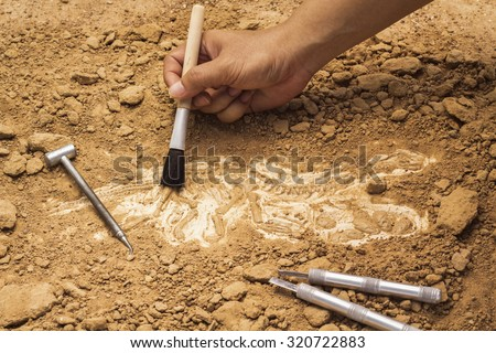 Paleontology Tools Stock Images, Royalty-Free Images & Vectors ...