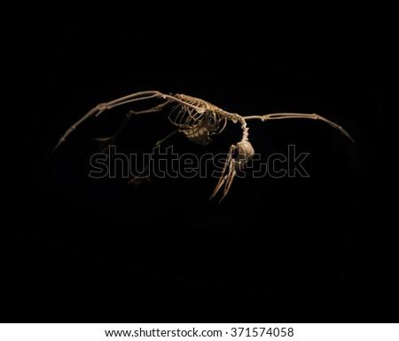 skeleton birds in flight on a black background - stock photo