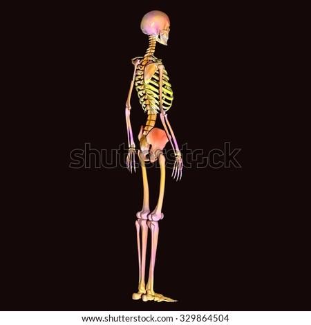skeleton body pains - stock photo