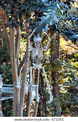 Skeleton hanging from a tree - stock photo