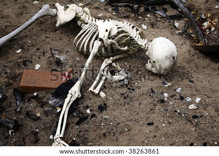 skeleton in dirt. bones and skull from human or dead man - stock photo