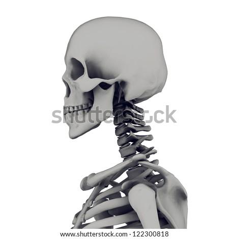 skeleton isolated on white background - stock photo