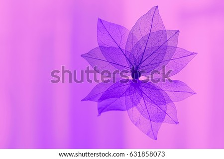 Skeleton leaf in the form of a flower in purple tones