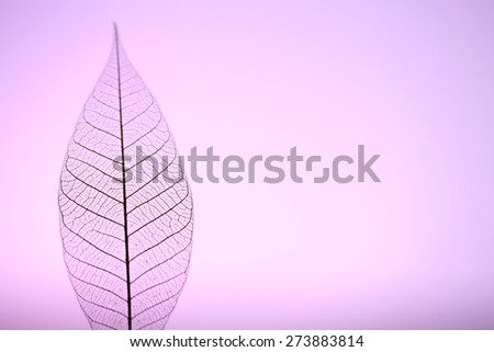 Skeleton leaf on purple background, close up - stock photo