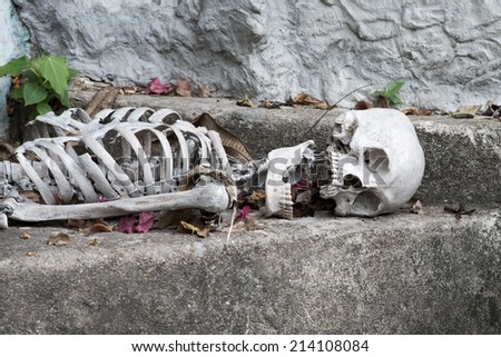 Skeleton lying in   Halloween - stock photo