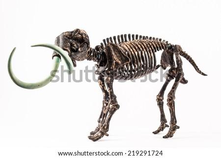 skeleton of mammoth isolated on white background - stock photo