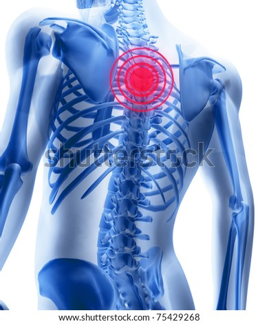 Skeleton of the man with the centres of a pain of a backbone. 3D the image of a man's skeleton under a transparent skin - stock photo