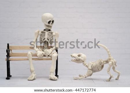 Skeleton with his skeleton dog companion - stock photo