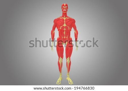 skeleton with human body muscles front