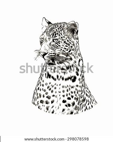 Sketch leopard - stock photo