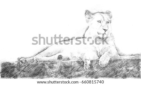 Sketch - Lying lioness on a bridge of wood