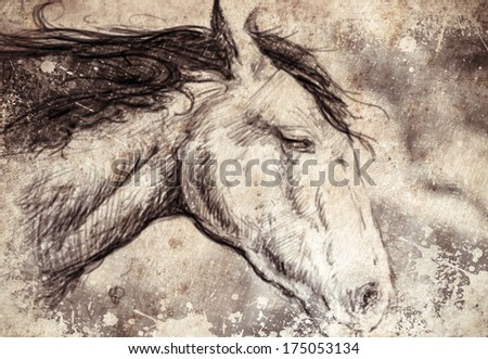 Sketch made with digital tablet, horse head - stock photo