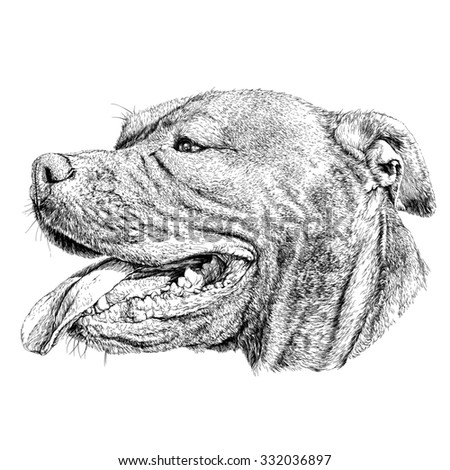 Sketch of Dog Pit bull terrier.