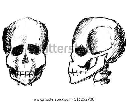 sketch of skulls (front view and side view)